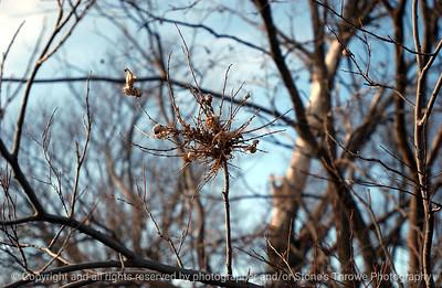 015-tree branch-clarke_co-09jan06-8938