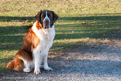 015-dog-van_horne-09nov13-5751