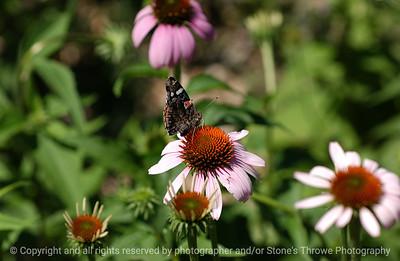 015-butterfly-urbandale-05jul05-0301