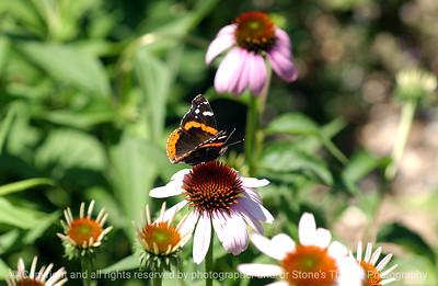 015-butterfly-urbandale-05jul05-0303