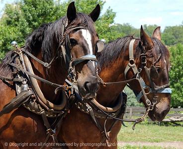 015-horse_team-urbandale-05jul05-c1-0264