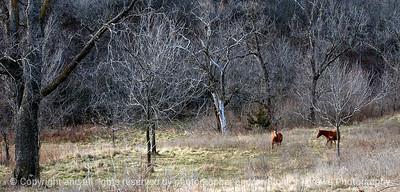 015-horse_pasture-madison_co-04dec04-c2-cc-6298