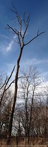 015-tree-madison_co-04dec04-c1-6305