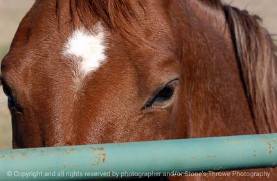 015-horse-madison_co-17oct05-1412