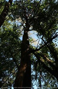 015-tree-madison_co-16sep04-5204