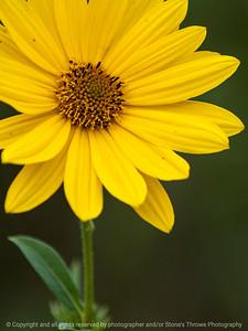 flower-wdsm-24sep15-09x12-001-5217