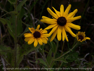 015-flower-wdsm-17aug17-12x09-002-0667