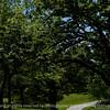 015-park_road-wdsm-31may17-18x12-003-3123