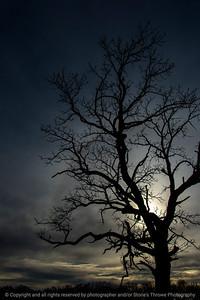 015-sunset_tree-wdsm-26nov17-08x12-017-3089