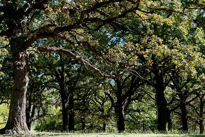 015-trees-wdsm-07oct13-003-4884