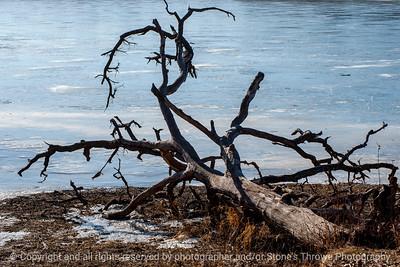 015-driftwood-wdsm-30jan15-18x12-203-1580