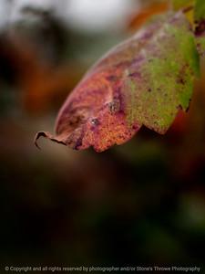 015-leaf_autumn-wdsm-09sep14-201-9528