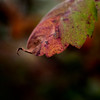 015-leaf_autumn-wdsm-09sep14-201-9528