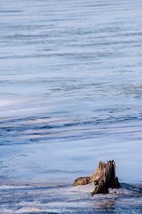 015-tree_stump-wdsm-30jan15-12x18-203-1608