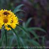 flower-wdsm-24sep15-18x12-003-5165