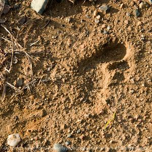 015-footprint-wdsm-26nov17-09x09-006-3160