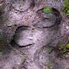 015-tracks_horseshoe-wdsm-31may17-09x12-001-3101