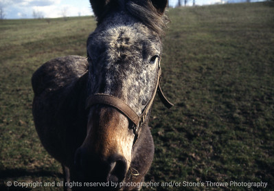 015-horse-saylorville-16apr84-f3-b35