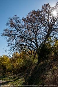 015-tree_autumn-wdsm-21oct14-12x18-004-1999