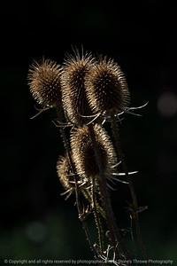 015-botanical-wdsm-10sep16-12x18-004-5529