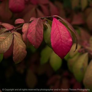 015-leaf-wdsm-03oct16-12x12-006-6025