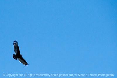 015-bird_hawk-wdsm-10oct13-4954