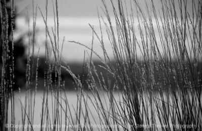 015-frost_grass-wdsm-09feb08-bw-1935