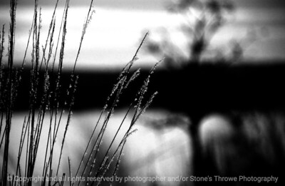 015-frost_grass-wdsm-09feb08-bw-abstr-1934