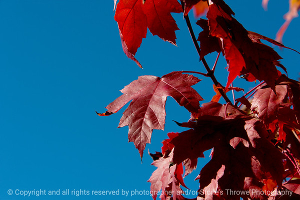 015-leaf-wdsm-16oct18-09x06-009-500-8384