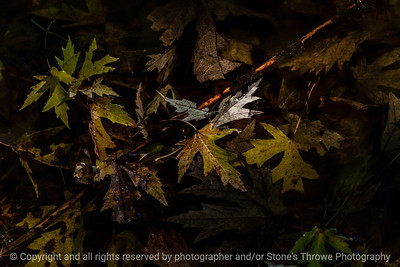 015-leaves_floating-wdsm-16oct18-09x06-009-500-8357