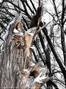 015-tree_detail-wdsm-06jan15-09x12-201-1371