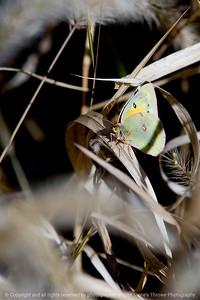 015-butterfly-wdsm-21oct11-1663