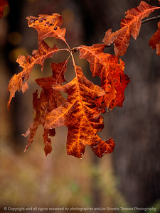 015-leaf_autumn-wdsm-17oct12-001-8863