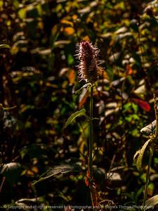015-botanical-wdsm-15oct14-09x12-001-0131