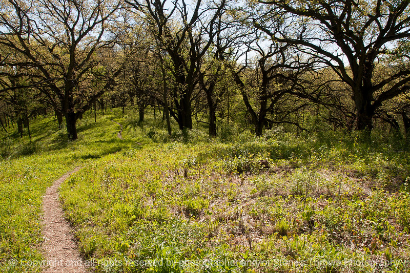 015-woods-wdsm-04may16-18x12-003-8495