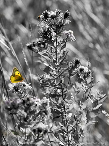 015-butterfly-wdsm-21oct11-1668