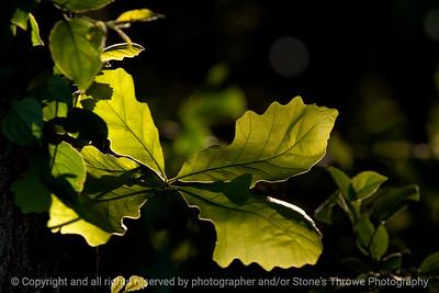 015-leaf-wdsm-30may13-0754