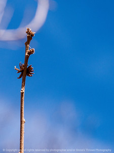 015-botanical-wdsm-21mar14-001-6863