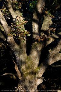 015-tree-wdsm-11oct10-8444