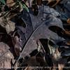 015-leaf_autumn-wdsm-13nov13-000-6016