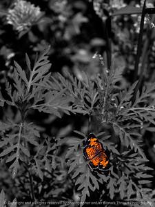015-butterfly-wdsm-02jul13-1948
