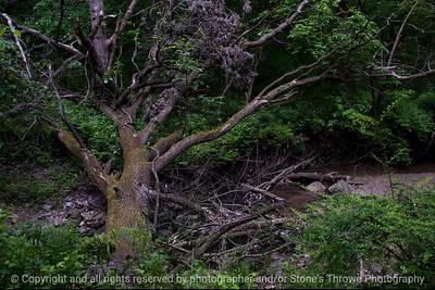 015-tree_fallen-wdsm-23may16-18x12-003-9279