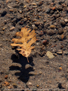 015-leaf_floating-wdsm-13nov13-001-6023