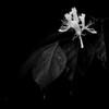 015-flower-wdsm-30may13-0708