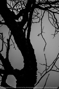 015-tree_detail-wdsm-13dec14-12x18-004bw-1183