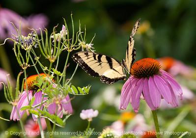 015-butterfly-wdsm-17jul13-2509