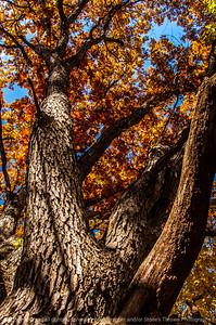 015-tree_autumn-wdsm-02nov13-5602