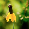 015-flower_insect-wdsm-29jun13-1789
