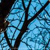 015-woodpecker-wdsm-05apr14-202-6986