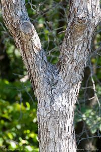 015-tree_detail-wdsm-07oct13-4841